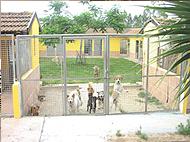 פנסיון כלבים כלביון - תמונות החצר