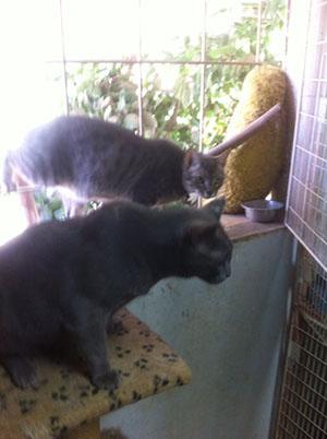 פנסיון חתולים - תמונה 3
